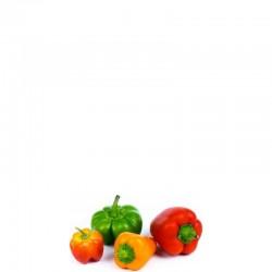 Lingot Wkład nasienny mini papryka