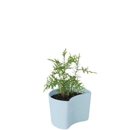 Rig-Tig Your Tree Doniczka z nasionami sosny