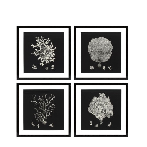 Eichholtz Black & Tan Corals EC191 zestaw 4 fotoobrazów