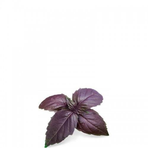 Veritable Lingot Wkład nasienny bazylia purpurowa