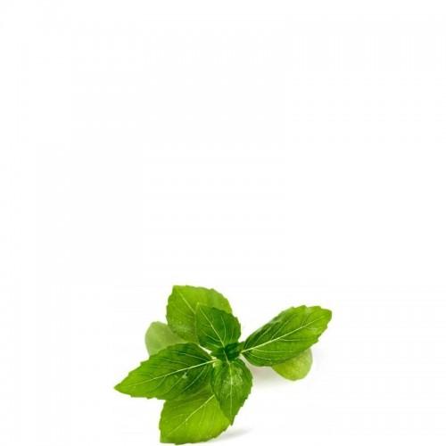 Veritable Lingot Wkład nasienny bazylia cynamonowa