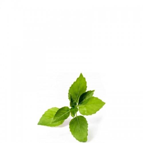 Veritable Lingot Wkład nasienny bazylia cytrynowa