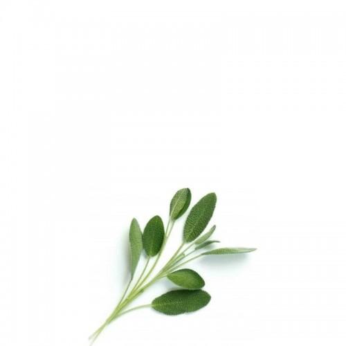 Veritable Lingot Wkład nasienny szałwia