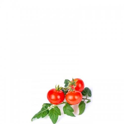 Veritable Lingot Wkład nasienny pomidorki koktajlowe