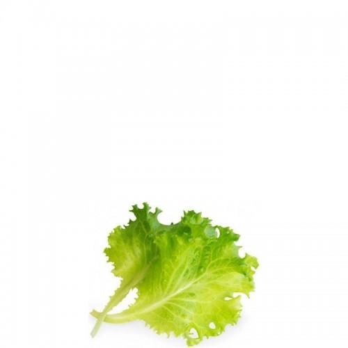 Veritable Lingot Wkład nasienny sałata masłowa