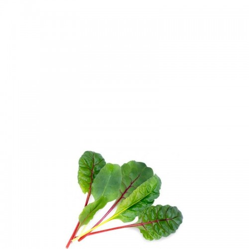 Veritable Lingot Wkład nasienny burak liściowy