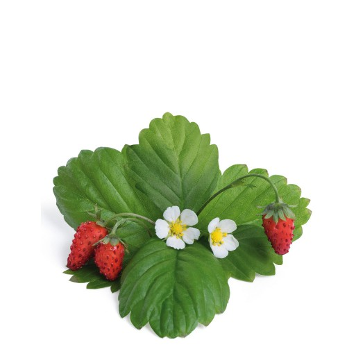 Veritable Lingot Wkład nasienny, krzewinki owocowe - poziomka czerwona