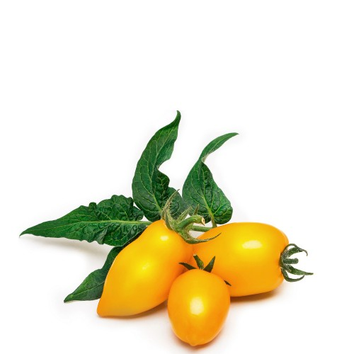 Veritable Lingot Wkład nasienny, mini warzywa - pomidor koktajlowy, żółty