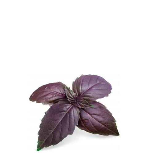 Veritable Lingot Wkład nasienny, zioła nietypowe - bazylia purpurowa