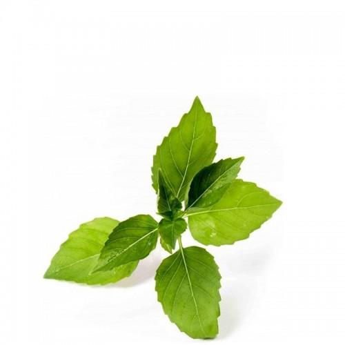 Veritable Lingot Wkład nasienny, zioła nietypowe - bazylia cytrynowa