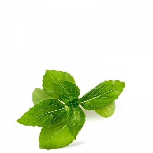 Veritable Lingot Wkład nasienny, zioła nietypowe - bazylia cynamonowa