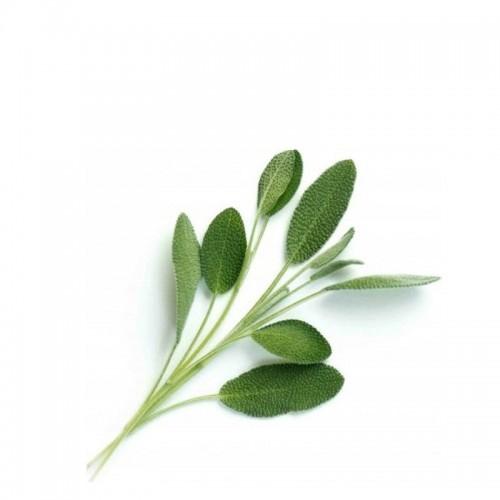 Veritable Lingot Wkład nasienny, zioła nietypowe - szałwia