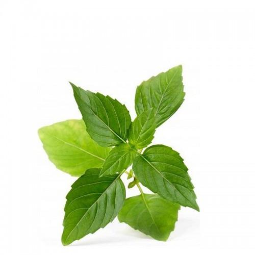 Veritable Lingot Wkład nasienny, zioła nietypowe - bazylia tajska