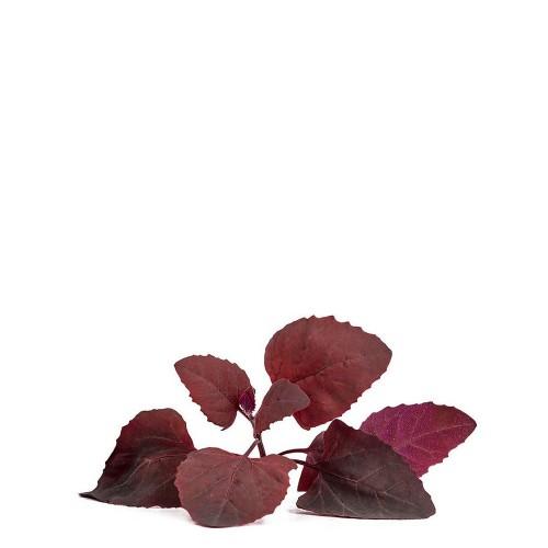 Veritable Lingot Wkład nasienny, zioła nietypowe - łoboda ogrodowa
