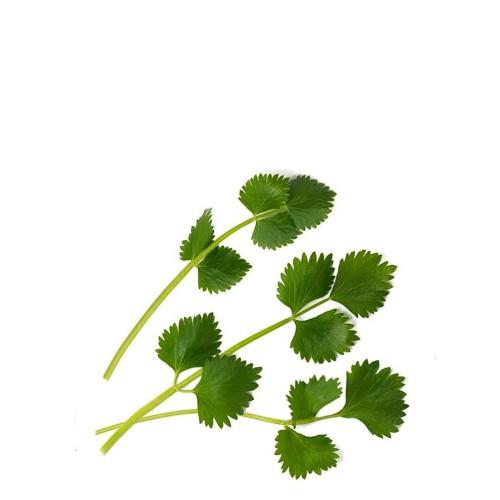 Veritable Lingot Wkład nasienny, zioła nietypowe - biedrzeniec anyż