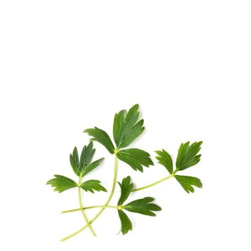 Veritable Lingot Wkład nasienny, zioła nietypowe - lubczyk
