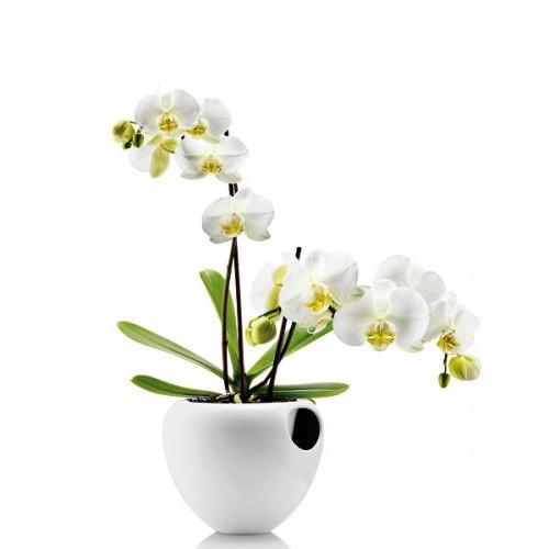 Eva Solo Orchid donica do storczyków